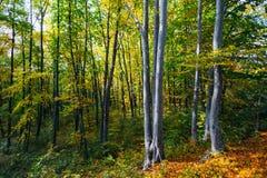 tło lasowi natury śniegu drzewa drewniani Obraz Stock