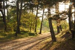 tło lasowi natury śniegu drzewa drewniani Zdjęcia Stock