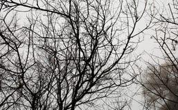 tło lasowi natury śniegu drzewa drewniani natur czarny i biały drewniani tła Obrazy Royalty Free