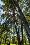 tło lasowi natury śniegu drzewa drewniani słońce promieni filtr przez gałąź Fotografia Stock