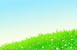Tło lato gazon z kwiatami ilustracji
