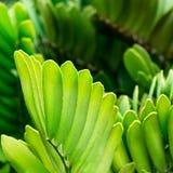 tło liść piękny zielony Fotografia Royalty Free