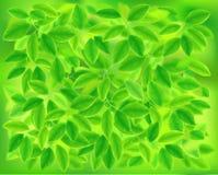 Tło liście również zwrócić corel ilustracji wektora ilustracja wektor