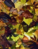 Tło liście w jesień kolorach Obrazy Stock