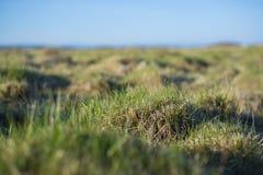 Tło - młoda, zielona trawa zakrywająca z kroplami rosa, zdjęcie royalty free