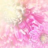 tło menchie piękne kwieciste Zdjęcia Royalty Free