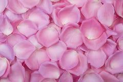 Tło menchii róży płatki Odgórny widok Obrazy Stock