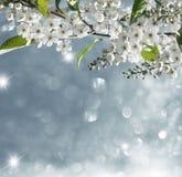 tło mleczy spring pełne meadow żółty Obrazy Royalty Free