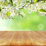 tło mleczy spring pełne meadow żółty Obraz Royalty Free