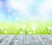 tło mleczy spring pełne meadow żółty Obraz Stock