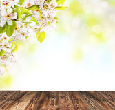 tło mleczy spring pełne meadow żółty Zdjęcia Stock