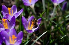 tło mleczy spring pełne meadow żółty Zdjęcie Stock