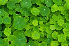 Tło mnóstwo zielone rośliny obrazy stock