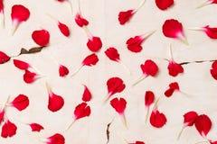 Tło na starym papierze od płatków czerwony kwiat obrazy royalty free