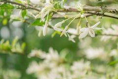 Tło natury liścia zielony drzewo Fotografia Royalty Free