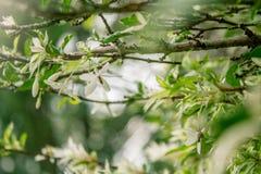 Tło natury liścia zielony drzewo Zdjęcia Stock