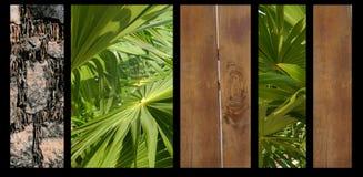 Tło natury rośliien drewna kamienia Abstrakcjonistyczny plakat Zdjęcie Stock