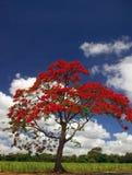 tło niebieskiego nieba, płomień czerwonego drzewa Obraz Royalty Free