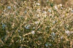Tło od białych kwiatów Zdjęcie Royalty Free