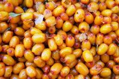 Tło od dojrzałego i soczystego jagodowego seabuckthorn fotografia stock