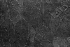 Tło od liści jaskrawy czarny kolor Obrazy Royalty Free