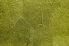 Tło od liści jaskrawy oliwny kolor Zdjęcia Stock