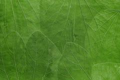 Tło od liści jaskrawy - zielony kolor Fotografia Stock