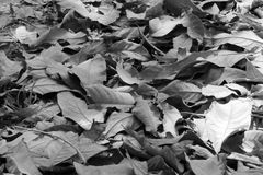 Tło od liścia Fotografia Royalty Free