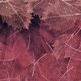 Tło od zmroku - czerwień liście Obraz Stock