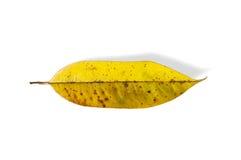 tło opuszczać biały kolor żółty Zdjęcie Royalty Free