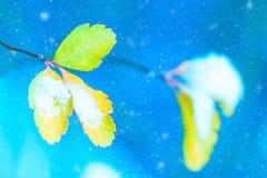 tło płatków śniegu biały niebieska zima Artystyczny wizerunek żółci jesień liście z śniegiem na błękitnym tle z płatkami śniegu Z zdjęcia royalty free