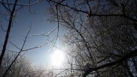 tło płatków śniegu biały niebieska zima Niebo las Obraz Stock