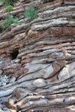 Tło, parawanowy ciułacz Montenegro, Europa - piękna sekcja skała - zdjęcie stock