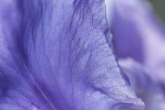 Tło, piękny, piękno, kwiat, okwitnięcie, jaskrawy, kolor, flora, kwiecista, kwitnie, uprawia ogródek, irys, makro-, natura, płate Zdjęcia Stock