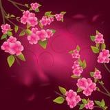 tło piękny Sakura Zdjęcia Stock