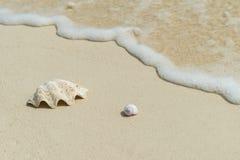 Tło plażowa sceneria fotografia royalty free