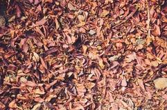 Tło pomarańczowy spadek opuszcza lying on the beach na ziemi fotografia royalty free