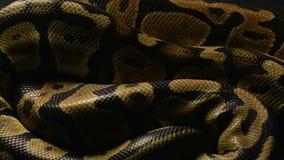 Tło pytonu ` s snakeskin zbiory