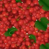 Tło różowe wiązki winogrona Zdjęcia Stock