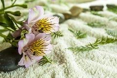 tło ręcznik Zdjęcia Stock