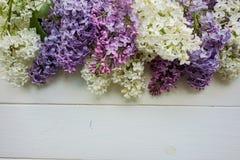 Tło, rama z gałąź bez w różnych kolorach, bez i purpury - biel, Zdjęcia Royalty Free