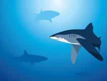 tło rekin ilustracji