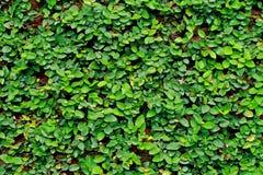 tło roślina Obrazy Royalty Free