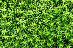 Tło roślina liści wzór Obrazy Royalty Free