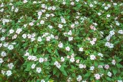 Tło rośliny i kwiaty Kwitnie teksturę Zdjęcia Stock