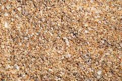 tło rozpada się seashells Zdjęcie Royalty Free