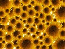 tło słonecznik Obraz Stock