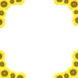 Tło słonecznik Obrazy Royalty Free