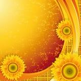 tło słoneczniki royalty ilustracja