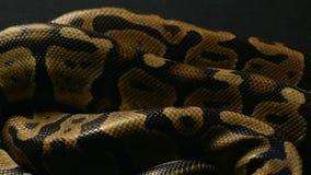 Tło snakeskin zbiory wideo